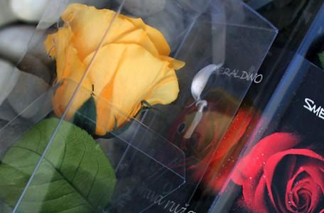 Stabilizované kvety červená ruža