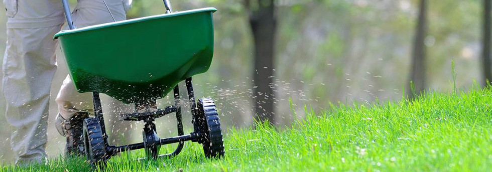 Hnojenie trávnika je dôležitá starostlivosť o trávnik