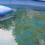 Zelená voda a riasy v bazéne – čo s tým