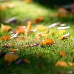 Zazimovanie trávnika a dosievanie