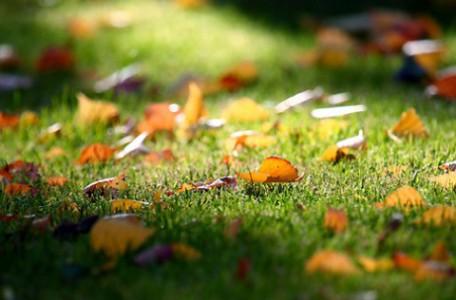 Ako zazimovať trávnik v jeseni