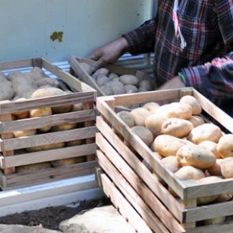 ako-skladovat-zemiaky