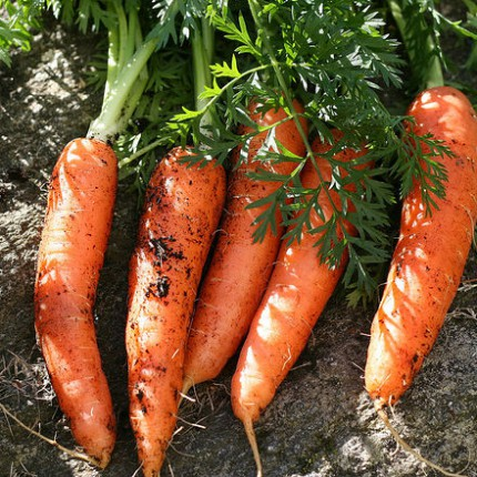 Ako skladovať mrkvu doma