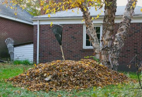 Čo s opadanými listami v jeseni