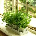 Ako pestovať bylinky v kuchyni ?