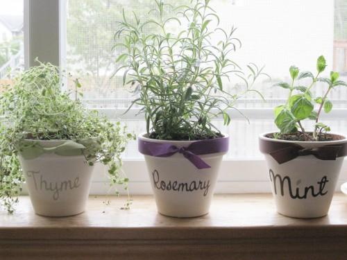 bylinky doma na okne