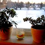 Ako sa starať o izbové rastliny v zime?