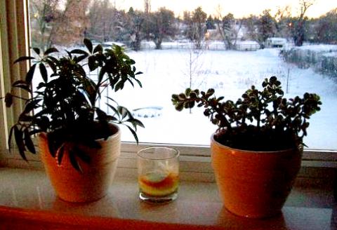 izbové rastliny na okne pocas zimy